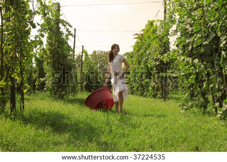woman with basket in a vineyard - stock photo