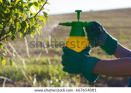 Woman with gloves spraying a leaves of fruit tree against plant diseases and pests. Use hand sprayer with pesticides in the garden.