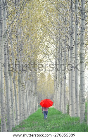 Woman with Red Umbrella Walking Away Through The Tree Alley on Cloudy Afternoon - stock photo