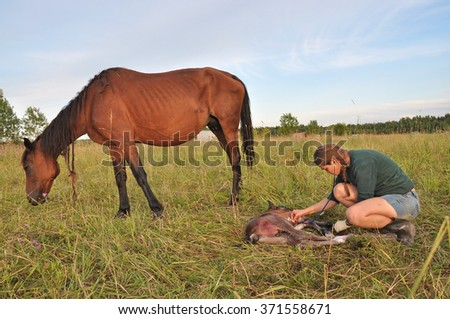 Woman worker in the field with a newborn foal. Veterinary care - stock photo