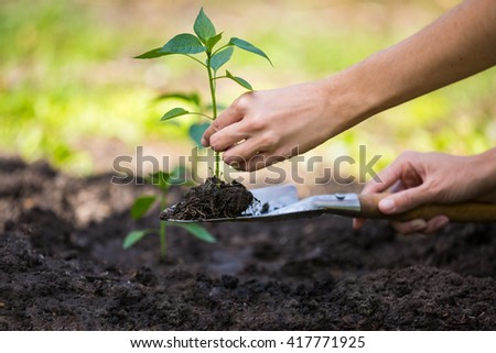 Woman working in the garden, planting a sprout into soil - stock photo
