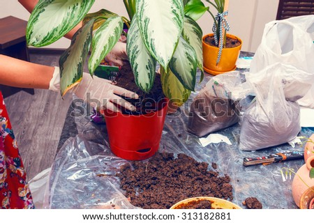 Woman working with house plant using shovel - stock photo