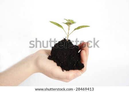 womans hand holding soil with a plant on a white background