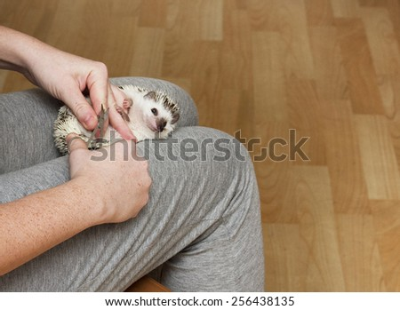 women clipping nails rodent hedgehog veterinary care - stock photo