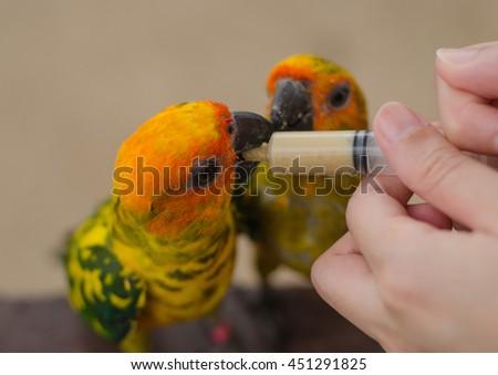 Women feeding birds through a syringe - stock photo