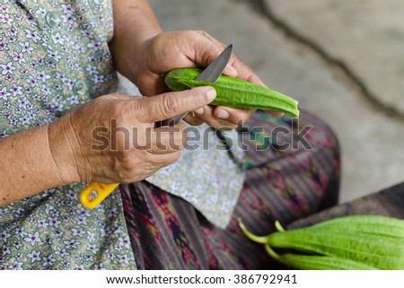 Women hand cutting Fresh angle gourd or Angled gourd,Thailand