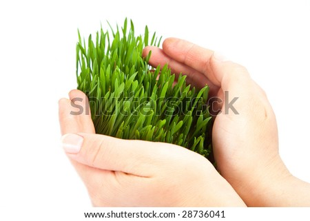 Women hands protect sprouts green grass on white background isolated - stock photo