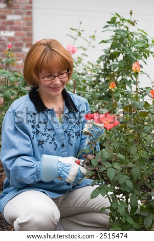 Women is having good time with her hobby by cutting roses in her garden - stock photo