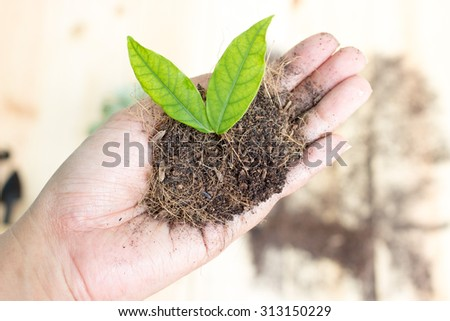 Women's hand are planting trees  - stock photo