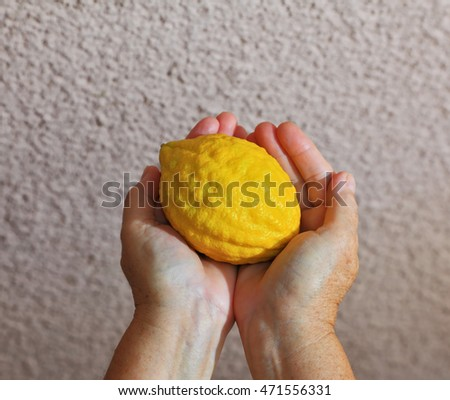 Women's hands holding the ritual fruit - citrus. Autumn holiday of Sukkot in Israel