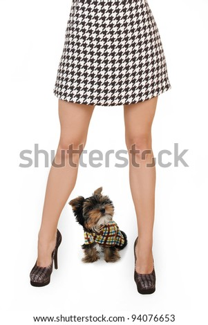 Women's slender legs with a dog are isolated on a white background - stock photo