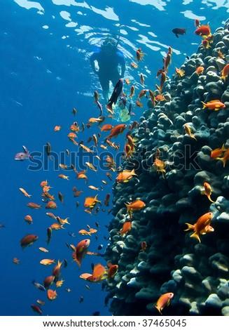 Women snorkeling in sea - stock photo
