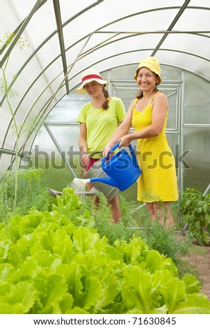 Women watering vegetables  with  watering pot in hot-house - stock photo