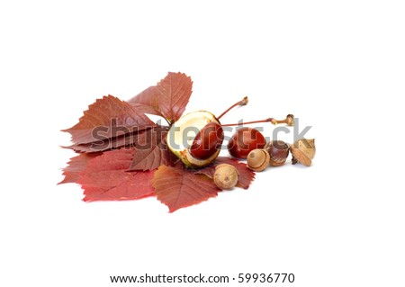 Wonderful acorns,chestnuts and leaves isolated on a white background.