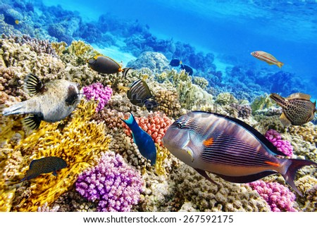 Wonderful and beautiful underwater world with corals and tropical fish. - stock photo