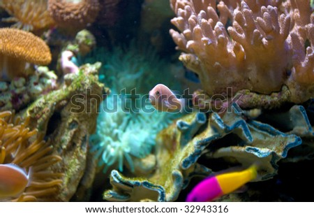 Wonderful and colorful underwater life in tropical sea