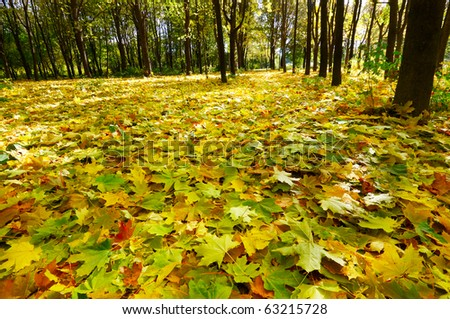 Wonderful autumnal grove.  Golden fallen leaves on the land. - stock photo