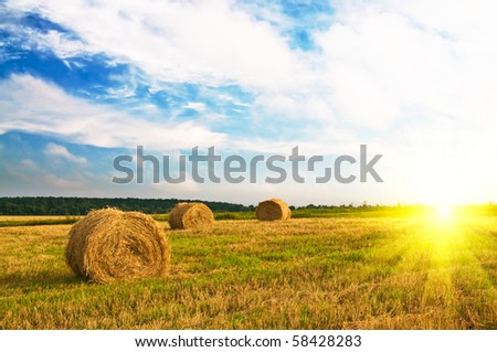 Wonderful blue sky and  bales on the field. - stock photo