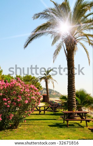 Wonderful bush of oleander and fun palm in the gardens. - stock photo