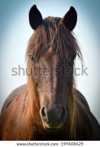 Wonderful closeup photo of brown horse muzzle