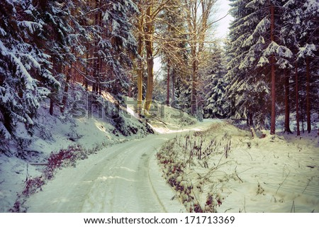wonderful forest in winter season