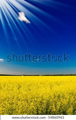 Wonderful house among golden rapeseed field and fun sun. - stock photo
