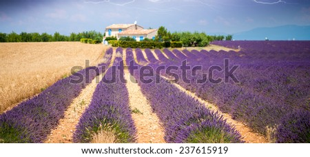 Wonderful landscape of lavender meadows during a storm. - stock photo