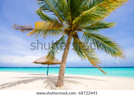 wonderful landscape with a palm and umbrella