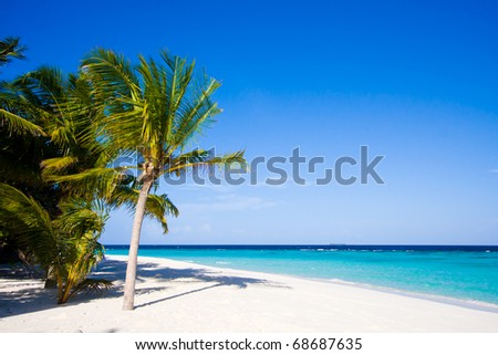 Wonderful landscape with palm on a tropical beach - stock photo