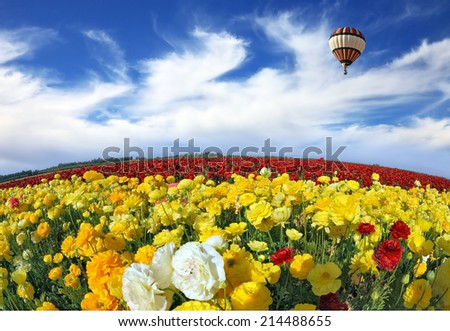 Wonderful spring mood, nice big balloon flies over the field. The huge field of red and orange buttercups. The picture was taken Fisheye lens - stock photo