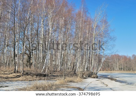 Wonderful sunny spring day in the forest
