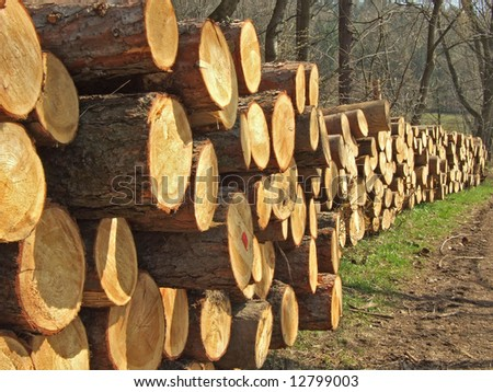 wood - stock photo