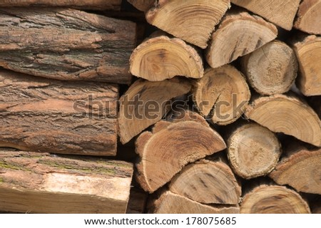 wood background nature trees forest