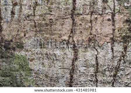 Wood Background  Texture and Abstract