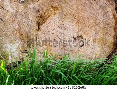 Wood background with green grass - stock photo