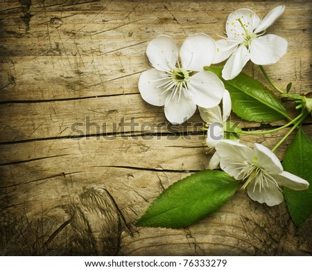 Wood background with spring cherry blossom - stock photo