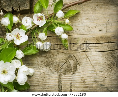 Wood background with spring flowers. Pear Blossom - stock photo