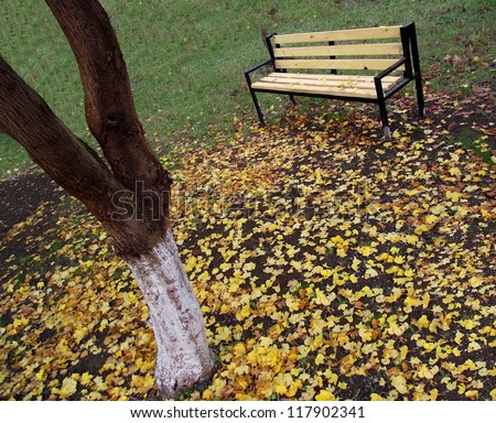 Wood bench, green grass and autumn leaves. - stock photo
