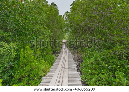 Wood bridge in mangrove forest - stock photo