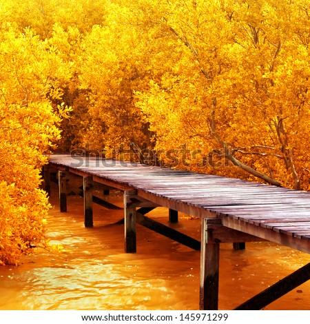 Wood bridge in mangrove forest. Explore nature. - stock photo