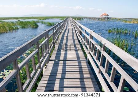 Wood bridge on Wetland , Khao Samroiyod National Park Thailand - stock photo