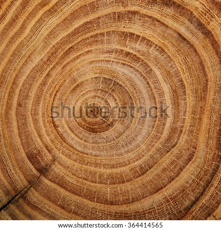 Wood cut background - stock photo