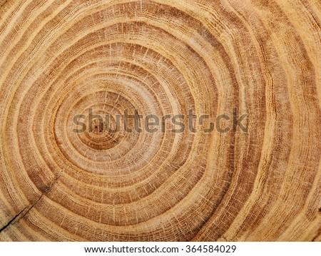 Wood cut background - stock photo