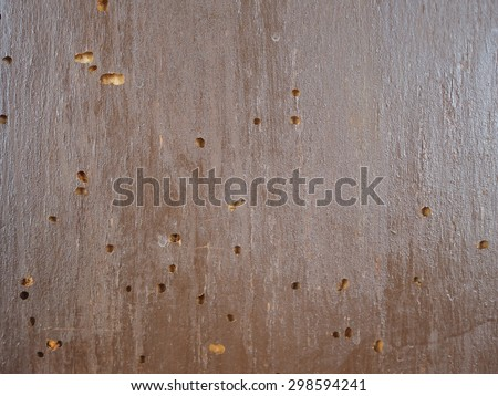 wood scientific name: