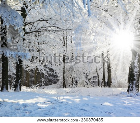 Wood fairy tale. Christmas sunny morning in a pine forest