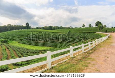 wood fence in tea farmland plantation in nature - stock photo