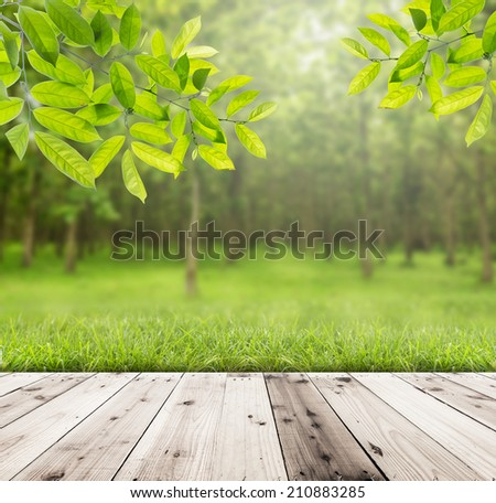 Wood floor on the forest. Nature background. - stock photo