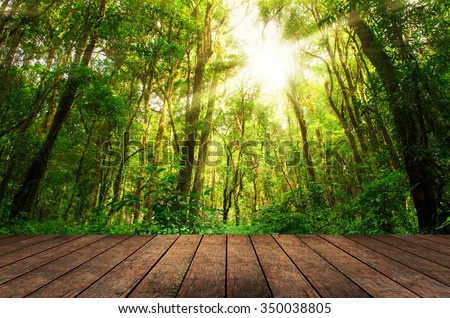 wood floor textured in on the forest backgrounds