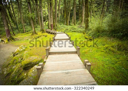 Wood Foot path in the nature ,Taiwan.