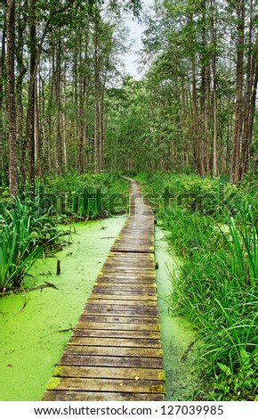 Wood footpath in a wet forest. - stock photo